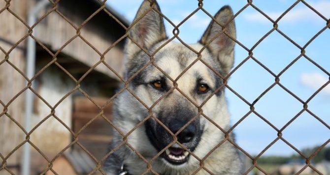 """Il Comune di Livorno """"sponsorizza"""" sul proprio sito 40 cani da adottare"""