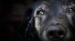 L'invecchiamento nel cane