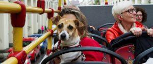 Cane sui mezzi pubblici: cosa dice la legge?