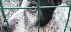 Miracoloso recupero a Roma. Lucky, cane caduto in un pozzo.
