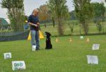 Obedience, Rally-O', sport  per imparare a relazionarsi e a comunicare.