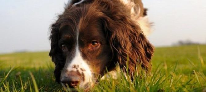 Divertirsi e fare sport con il cane: le attività olfattive.