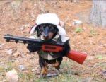 L'aggressività nel cane e l'ansia come causa di comportamento aggressivo