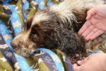Malattie trasmesse da vettore: L'Ehrlichia nel cane