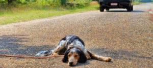 Il mio cane dove lo metto, dove lo porto non si sa. Estate e abbandono, il triste binomio.