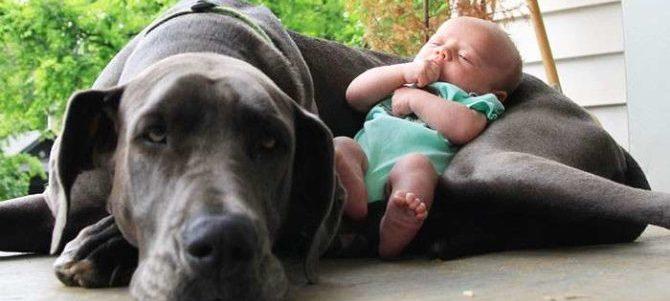 Cani e bambini: rispetto, comprensione e comunicazione.