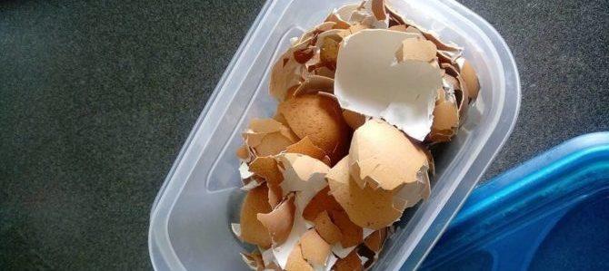 Guscio d'uovo al cane: integrare il calcio nella dieta