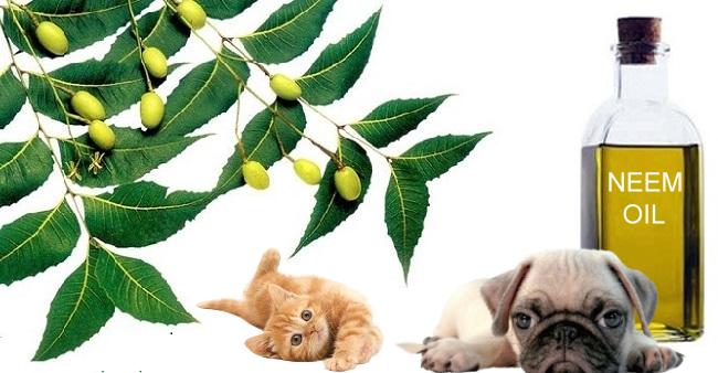 Olio di Neem come repellente per cani: cos'è e come si usa