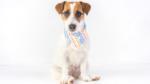 ZAMPA MILANO, il nuovo brand dedicato ai cani di piccola taglia