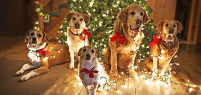 Caro Babbo Natale. Regali natalizi per i nostri amici pelosi