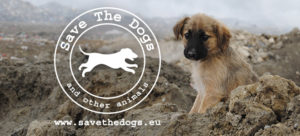 A Natale il regalo più bello lo fai con Save The Dog