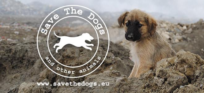 A Natale il regalo più bello lo fai con Save The Dog