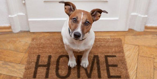 Cani in condominio: qual è il numero massimo?