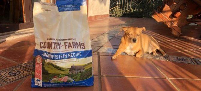 L'importanza di scegliere la giusta crocchetta per il nostro cane