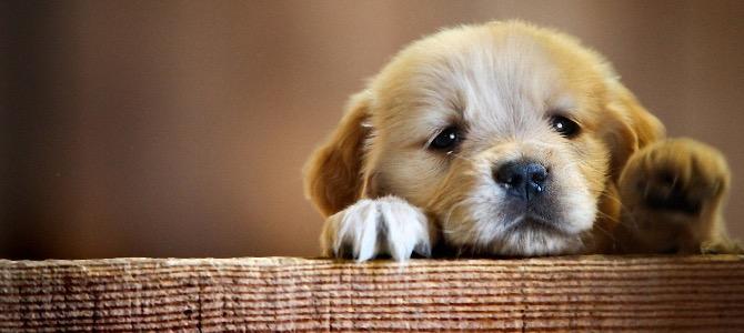 Anchilostomi nel cane: cosa sono e come eliminarli