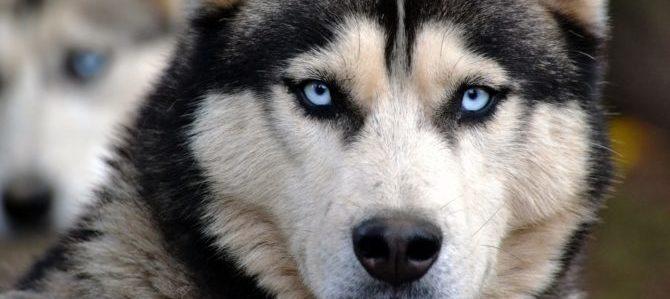Le razze di cani più belle al mondo