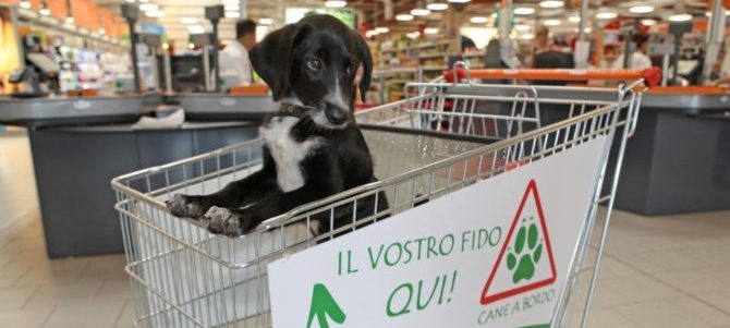 Cani al supermercato: cosa dice la legge in Italia?