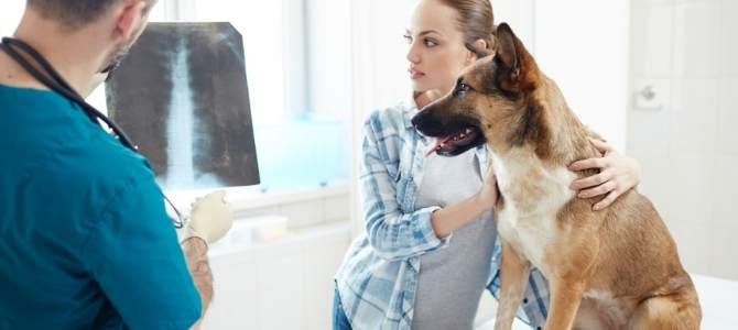 edema polmonare cane terapia